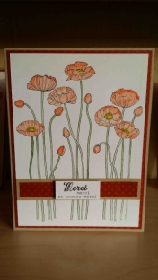 Merci - Coquelicots orange